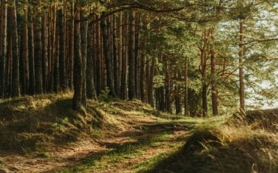 Defra announces funding boost and new partnership with Forest for Cornwall