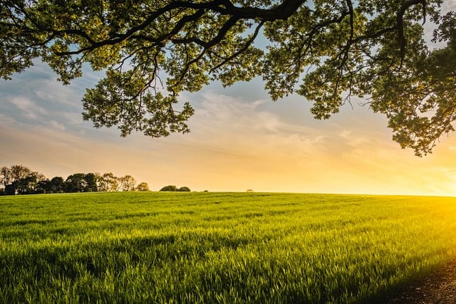 More Than 2,000 Farmers Respond to Sustainable Farming Incentive Pilot