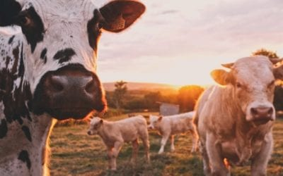 Crackdown on livestock worrying in England and Wales